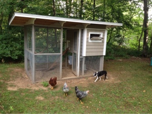 ...and chickens, with our site director.